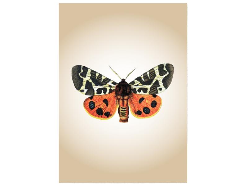 Wandtafel Schild Schmetterling 4 Vintage Dekoration